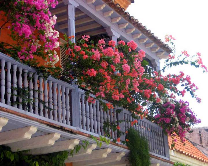 Plant flowers where the balcony is west