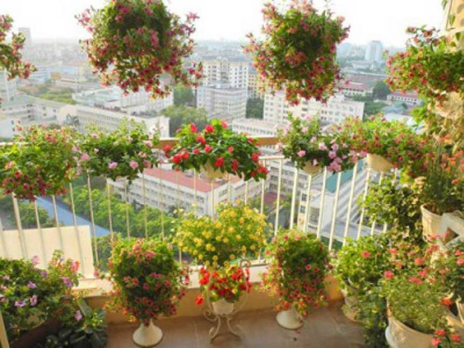 Grow flowers where the balcony is west