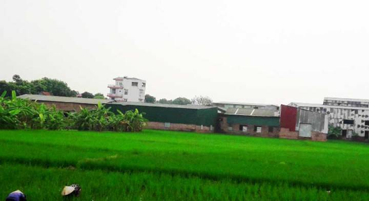 Land violation in Hoai Duc District