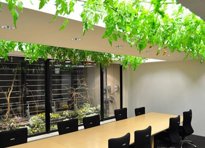 Japan design rice paddies in a 9- storey building