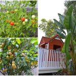 Hong Ngoc Show Garden Vegetables In The United States