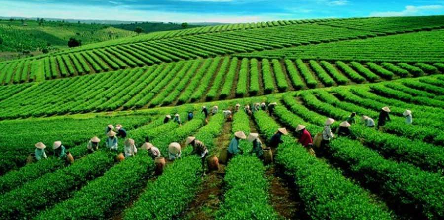 Hiep Khanh Tea