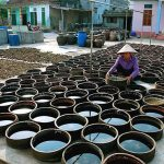 There is a gift of bold flavor of Da Nang beach – Nam O fish sauce