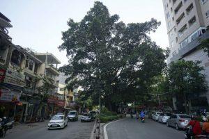 Vu Trong Phung Street will be 11m wide
